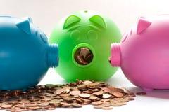 Porcos olhar fixamente Imagem de Stock