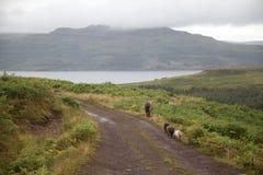 Porcs ayant une promenade Photographie stock libre de droits