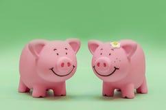Porcs dans l'amour Photos stock