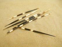 porcupine καλάμια Στοκ φωτογραφία με δικαίωμα ελεύθερης χρήσης