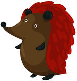 Porcupine Stock Image