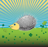 Porcupine Royalty Free Stock Images