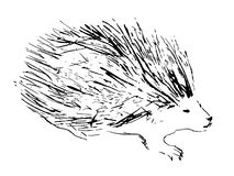 Porcupine animal. Hand drawn illustration. Sketch style. Black vector image on white background Royalty Free Stock Image