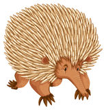 Porcupine. A borwn porcupine on white backbround Royalty Free Stock Photo
