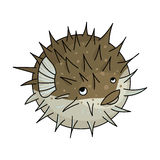 Porcupine fish icon in cartoon style isolated on white background. Sea animals symbol stock vector illustration. Porcupine fish icon in cartoon design isolated Royalty Free Stock Photography