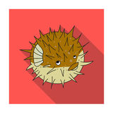 Porcupine fish icon in flat style isolated on white background. Sea animals symbol stock vector illustration. Porcupine fish icon in flat design isolated on Royalty Free Stock Image