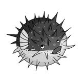 Porcupine fish icon in monochrome style isolated on white background. Sea animals symbol stock vector illustration. Porcupine fish icon in monochrome design Royalty Free Stock Photo