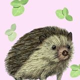 Porcupine illustration drawn with pen and digital color royalty free illustration