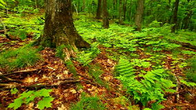 Michigan Nature Landscapes stock video
