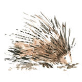 Porcupine. With raised needles on white background Stock Photography