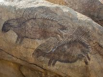 Porcupine Rock Drawings. Rock drawings or simple Petroglyphs of 2 porcupines, on a rock. taken near Denver Colorado stock photography