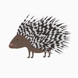 Porcupine on white background Royalty Free Stock Photography