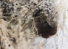 Porcupine in Winter Stock Image