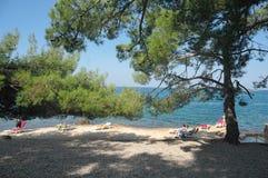 Porec, Chorwacja Wrzesień 5, 2018: Turyści sunbathe na skalistym brzeg pod dużymi sosnami Sławne plaże Chorwacja obraz royalty free