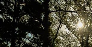 pores do sol atrás de 2 Imagem de Stock Royalty Free