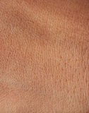 Pores on human skin. Pores and lines on human dark brown girl skin closeup royalty free stock photo