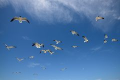 Poretto Beach, Galveston Island Royalty Free Stock Images