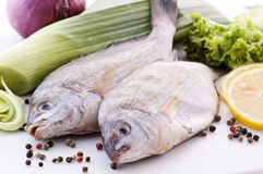 Porgies Stock Photography