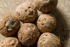 Pori di germinazione delle noci di cocco immagini stock