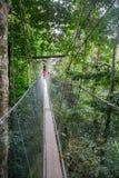 Poring Hot Spring, Sabah, Borneo Malaysia. Hanging Bridge at Poring Hot Spring, Sabah, Borneo Malaysia royalty free stock images