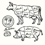 Pork and beef cuts. Hand drawn set Stock Photos