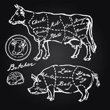 Pork and beef cuts. Hand drawn set Royalty Free Stock Images