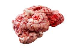 Pork brain isolated on white background. Fresh pork brain isolated on white background royalty free stock photography