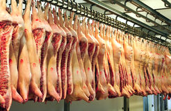 Pork carcasses Stock Images