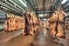 Pork carcasses hanging on hooks in a cold store Stock Photography