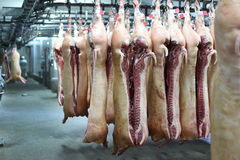 Pork carcasses on hooks royalty free stock photography
