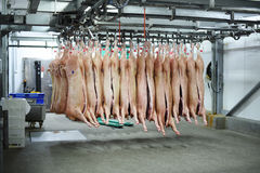Pork carcasses on hooks Stock Photo