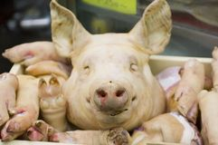 Pork Display Royalty Free Stock Images