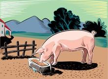 Pork, while eating royalty free illustration