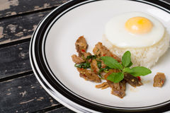 Fried basil leave with pork. On rice and fried egg on rice royalty free stock images