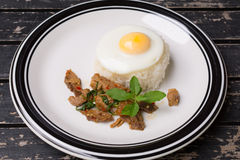 Fried basil leave with pork. On rice and fried egg on rice stock photos