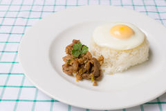 Pork fried with garlic. And fried egg on rice Royalty Free Stock Images