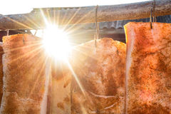 Pork ham in the sun. Pork ham with spices in the sun stock image