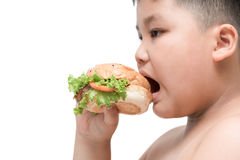 Pork hamburger on obese fat boy hand background isolated. On white, unhealthy food, junk food or fast food Stock Photography