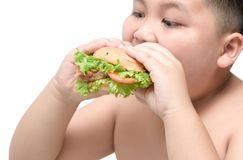 Pork hamburger on obese fat boy hand background isolated. On white, unhealthy food, junk food or fast food Royalty Free Stock Images