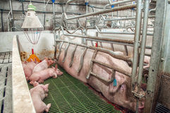 Pork plant Royalty Free Stock Images