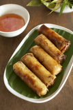 Pork and vegetable spring roll Stock Image