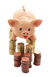 Porky on columns of coins Stock Image