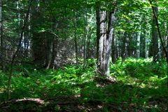 Porośle w Frontenac parku narodowym zdjęcie royalty free