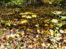 porośle w lesie w pogodnym jesień dniu obraz royalty free