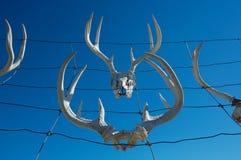 poroże jeleni zdjęcie royalty free