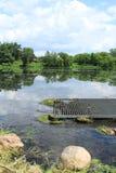 Porosła jeziorna roślinność Zdjęcia Royalty Free