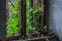 porosły okno z liśćmi zdjęcie royalty free