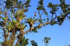 Porosły drzewo Zdjęcia Stock