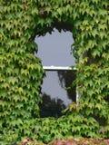 porosły okno obrazy stock