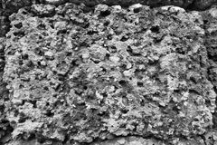 Porous abstract texture of stone surface Stock Photography